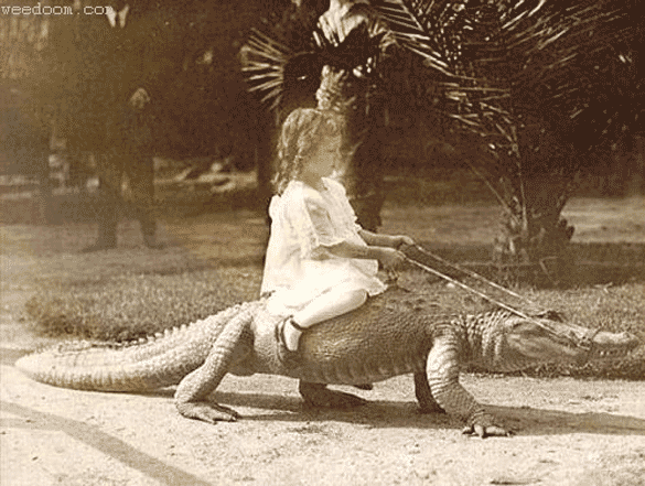girl-on-crocodile