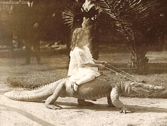 girl-on-crocodile